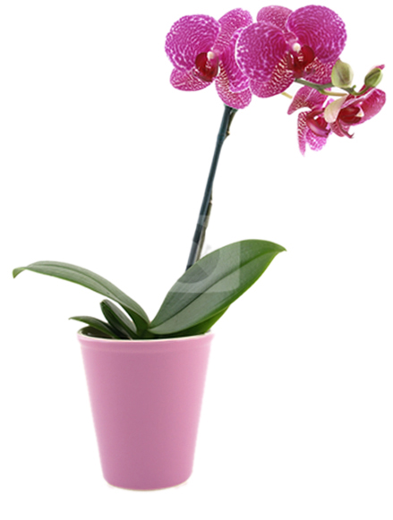 Best 28 caring for your potted orchid faqs about caring for potted orchids flower - How to care for potted orchids ...
